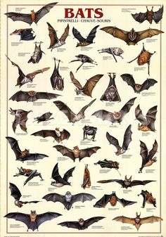 """""""Bats"""" Art Print"""