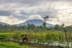 Macul . . #pemandangan #pemandanganalam #sawah #ricefield #landscape #landscapes #landscaper #landscapephotography #landscapelovers #nature #naturephoto #canon #aktivitaspagi #canonphotography #tamron #petani #merapi #magelang #mungkid #indonesia #merapimerbabu #pagi #morning #naturephotography #instagram #photography #geojateng