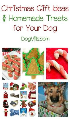 Don't forget Fido this holiday season! Check out Christmas gift ideas & treat recipes for dogs! Homemade Dog Treats, Pet Treats, Dog Treat Recipes, Dog Food Recipes, Dog Food Online, Cheap Dog Food, Easiest Dogs To Train, Christmas Dog, Christmas Gifts For Dogs