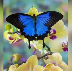 3340 Mejores Imágenes De Paisajes Pajaros Flores Mariposas