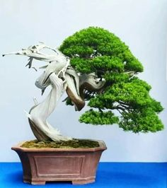 Bonsai Art, Bonsai Garden, Bonsai Trees, Juniper Bonsai, Plantas Bonsai, Japanese Art, Garden Sculpture, Tools, Outdoor Decor