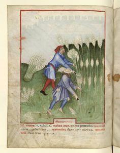 Tacuinum Sanitatis, Italian, c. 1390-1400.