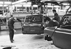 Mini production line Mini Cooper Classic, Classic Mini, Classic Cars, Mini Morris, Mini Vans, John Cooper, Assembly Line, Mini Stuff, Mini Coopers