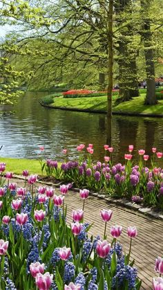 """""""De Keukenhof"""" in Lisse, The Netherlands - My site Beautiful Flowers Garden, Pretty Flowers, Beautiful Gardens, Beautiful Landscape Wallpaper, Beautiful Landscapes, Photography Studio Background, Nature Photography, Tulip Painting, Stone Path"""