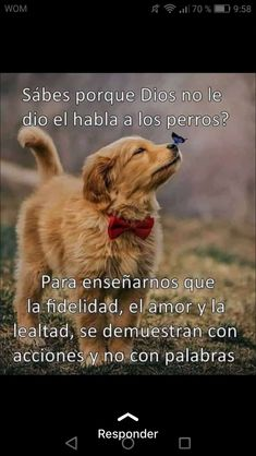 La imagen puede contener: meme y texto Iphone Wallpaper Cat, Animals Beautiful, Cute Animals, Happy Day Quotes, Mo S, Pet Memorials, Profile Photo, Funny Animal Pictures, I Love Dogs