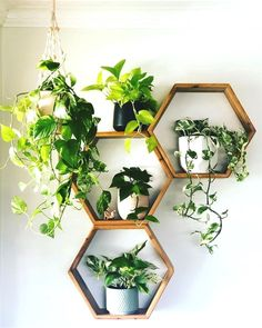 golden pothos plant shelfie small plants plant gang plant family cute pots for plants plant display green foliage plants leaves plants at home living with plants air purifying house plants clean air p Golden Pothos Plant, Air Cleaning Plants, Boho Dekor, Small Plants, Air Plants, Plants Indoor, Foliage Plants, Potted Plants, Cactus Plants