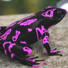 Cool frog!