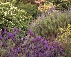 Mediterranean Gardening article by the Master Gardeners