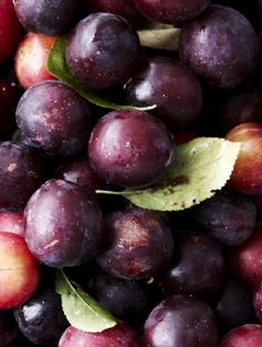 Plums are so lusciously deep and dark like purple ink on the outside and like cold butter cream on the inside.