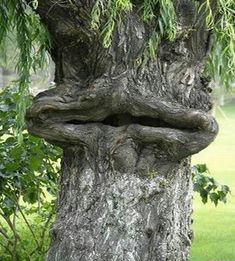 Watch this funny tree which has shape same like cartoon face. This funny nature picture will make you smile. Weird Trees, Tree People, Tree Faces, Unique Trees, Tree Carving, Old Trees, Nature Tree, Tree Art, Amazing Nature