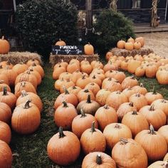 I wanna go to a pumpkin patch . I wanna go to a pumpkin patch patch Fall Pictures, Fall Photos, Autumn Cozy, Fall Winter, Danielle Victoria, Crochet Fall, Autumn Photography, Autumn Aesthetic Photography, Atticus