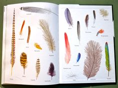 feather endpapers