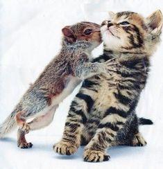 Ahh >> Cute Baby Animals Clipart #superb