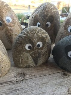 Boulder Angry Birds