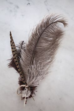 Feathers appear when angles are near. Feather Painting, Feather Art, Bird Feathers, Feather Crafts, Feather Texture, Hope Is The Thing With Feathers, Metallic Flats, Jolie Photo, Shades Of Grey