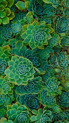 33 Ideas For Wall Paper Laptop Nature Beautiful Succulents Wallpaper, Cacti And Succulents, Planting Succulents, Garden Plants, Succulents Drawing, Phone Backgrounds, Wallpaper Backgrounds, Iphone Wallpaper, Wallpapers