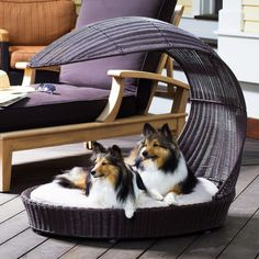Outdoor Dog Accessories and Toys: Outdoor Chaise Lounger from Petsmart