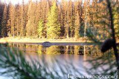 IRISHWATERDOGS Grand Forks trail, BC. Beaver lodge on frozen lake.