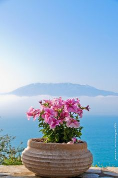 """A Greek version of a garden. """"In A Pot' in Nafpaktos. Beautiful World, Beautiful Places, Santorini Grecia, Greece Today, Greece Pictures, Greece Islands, Greece Travel, Dream Vacations, Container Gardening"""