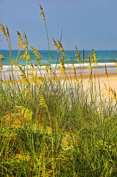 St. Augustine, Florida, Sea Oats, by JamesWatkins