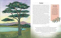 Be More Tree: A Journey of Wisdom, Symbols, Healing and Renewal: Alice Peck, Melissa Launay: 9781782493389: Amazon.com: Books