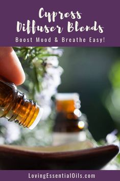 Cypress Diffuser Blends - Boost Mood & Breathe Easy! by Loving Essential Oils. Get more blends PLUS our free printable cheat sheet with the recipes,  just visit our blog post. #lovingessentialoils  #cypressessentialoilblends #diffuserblendswithcypress