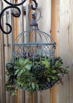 this Bird Cage Succulent Planter is one of 30 Charming Outdoor Best DIY Planter Ideas to Brighten Your Yard - GoodNewsArchitecture ourdoor planters Diy Planters, Garden Planters, Succulents Garden, Garden Art, Planting Flowers, Planter Ideas, Succulent Ideas, Succulent Planters, Succulent Containers