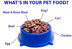 What is in your dog food? You should know the danger of commercial dog food.