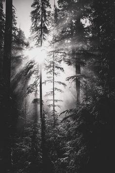 Here, Amongst the Trees ‹ Paula Wallis Photography