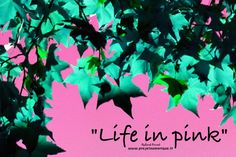 Life in pink