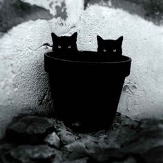 22 Majestic Black and White Photos That Capture the Mysterious Lives of Cats…