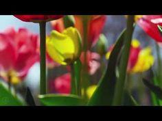 ▶ SPRING 4K (ULTRA HD) - YouTube