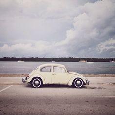 Beetle / photo by Pawel Nolbert