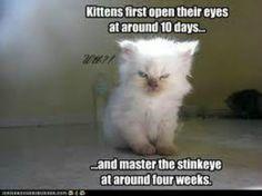 That's some stink eye!