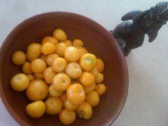 Tomate Malinalca de la milpa