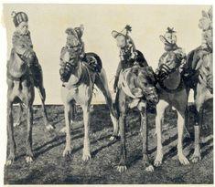 greyhound race 1930 - monkeys? Really? oh my goodness, why?