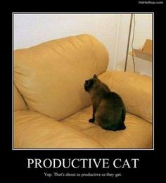 funny-cats-demotivational-posters.jpg (620×685)