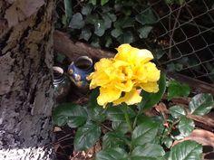 #flowers #rosa #amarilla