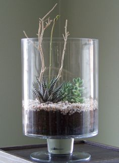 air plant design - Google Search