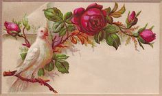 Free Printable Label: Vintage Label with White Dove and Red Rose