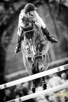 equestrian equine cheval pferde caballo stadium show jumping | BW bay jumper