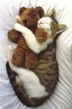 Everybody needs a teddy bear