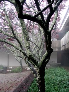 Misty day at Porter College, UCSC
