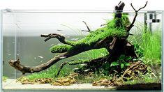 Aquarium inspiration Aquascaping - Seepferdchen Aquarien Ltd. Aquarium Aquascape, Aquascaping, Aquarium Landscape, Home Aquarium, Seahorse Aquarium, Aquarium Fish Tank, Betta Tank, Betta Fish, House Painting Tips