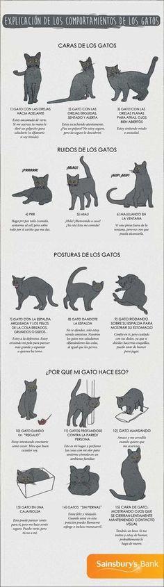 Por fin podrás comprender lo que tu gato está tratando de decirte gracias a esta…