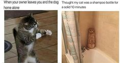 Trust me on that - I Can Has Cheezburger? Cat Clock, Gif Pictures, How To Get Sleep, Fresh Memes, Cat Gif, Dog Photos, Animal Memes, Cat Memes, Cat Lady