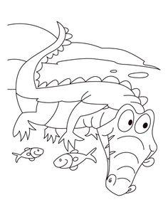 Alligator Motto Live N Let Coloring Pages