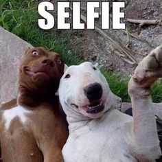 So cute!  I love the brown dog's expression but I can't call that a selfie that's called a twoie (I just mad that up)