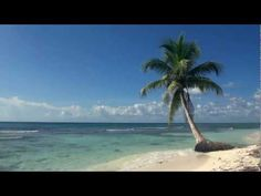 Relaxing 3 Hour Video of A Tropical Beach with Blue Sky White Sand and Palm Tree - YouTube