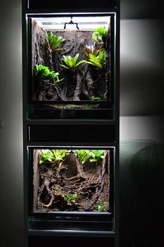 340 Best Vivariums Terrarium Palidarium Aquascape Images